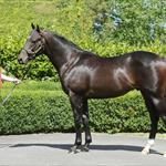 Impressive Purchases at Karaka